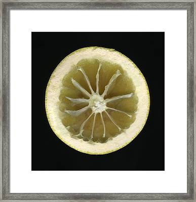 One Half Of An Eaten Grapefruit Framed Print by Thomas J Peterson
