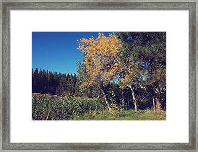 One In A Million Framed Print by Laurie Search