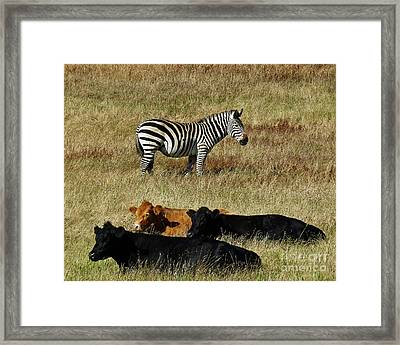 One Is Not Like The Others Framed Print