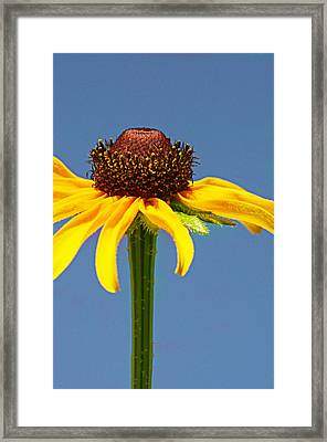 One Lone Flower Framed Print by Michelle Armstrong