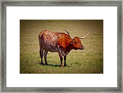 One Lone Longhorn Framed Print by Doug Long