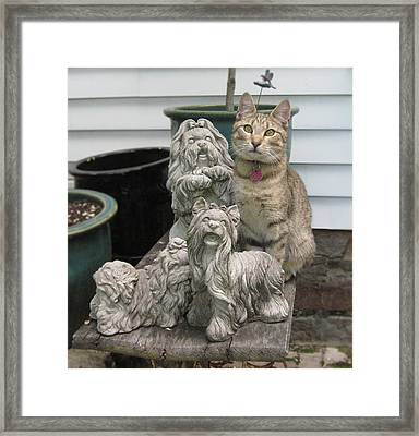 One Of These Things Is Not Like The Other Framed Print by Tina Ann Byers