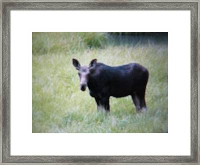 Framed Print featuring the photograph one of Yellowstone's babies by Shawn Hughes