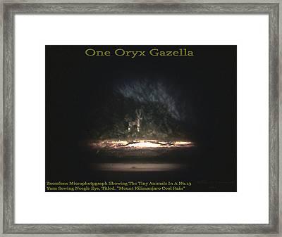 One Oryx Gazella  Framed Print by Phillip H George