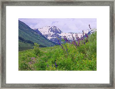 One-sided Penstemon Framed Print