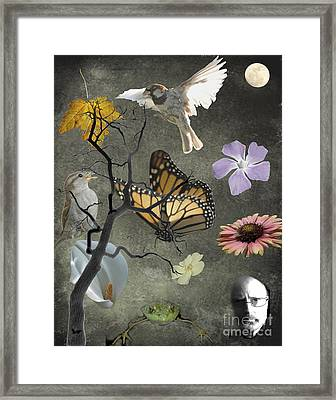 One Small Corner Of Creation Framed Print by Jim Wright