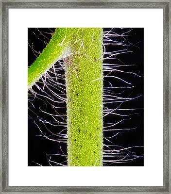 One Thousand Arms Framed Print