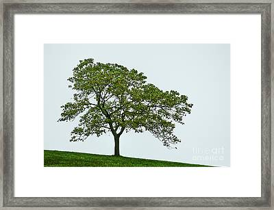 One Tree Hill. Framed Print by John Greim