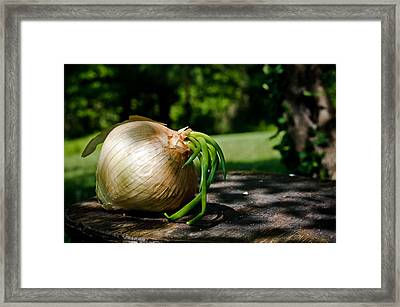 Onion In The Sun Framed Print by Lori Coleman