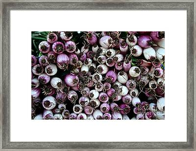 Onion Power Framed Print