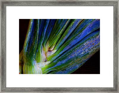 Onions Framed Print by Michael Friedman