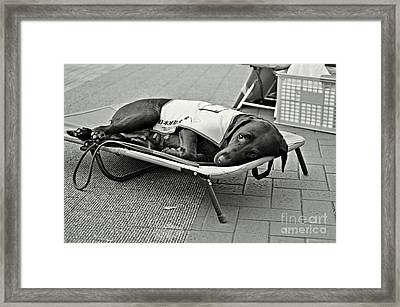 Only Human Framed Print by Dean Harte