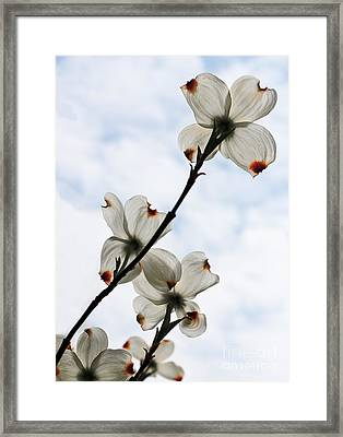 Framed Print featuring the photograph Only Once A Year by Barbara McMahon