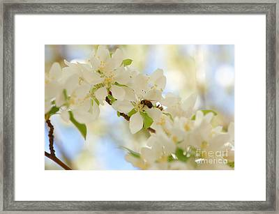 Only The Lonely Framed Print by Melissa Haley