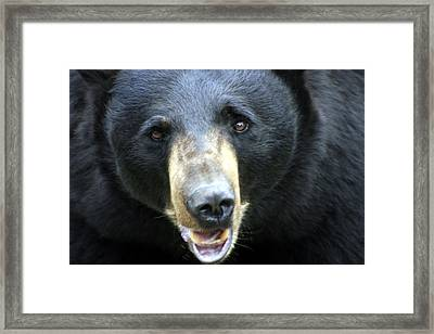 Framed Print featuring the photograph Only You by Doug McPherson