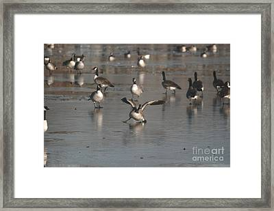 Framed Print featuring the photograph Oops That's Ice by Mark McReynolds