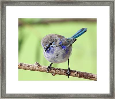 Framed Print featuring the photograph Opal by Serene Maisey