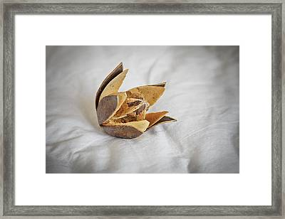 Open Cotton Bud And Square Framed Print by Kantilal Patel