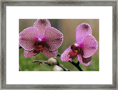 Open Face  Framed Print by Paula Rountree Bischoff