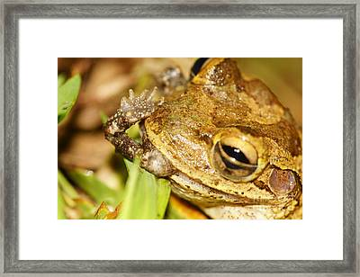 Open Mouth - Insert Foot Framed Print
