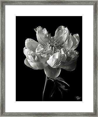 Open Peony In Black And White Framed Print by Endre Balogh
