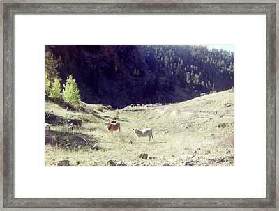 Framed Print featuring the photograph Open Range by Bonfire Photography