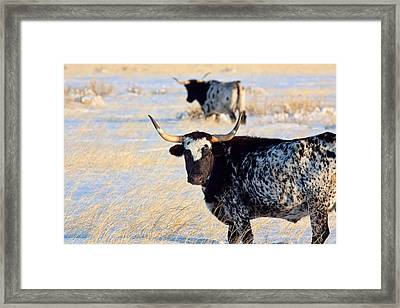Framed Print featuring the photograph Open Range by Jim Garrison