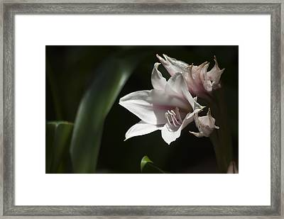 Open To The Light Framed Print
