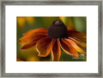 Open Up Framed Print