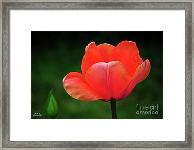 Opened Red Framed Print by Diego Re