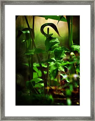 Opening And Upward Framed Print