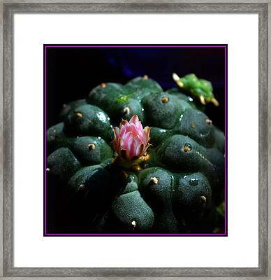 Opening Peyote Flower Framed Print by Susanne Still