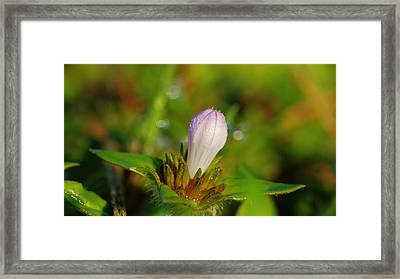Opening Soon Framed Print by Don Youngclaus