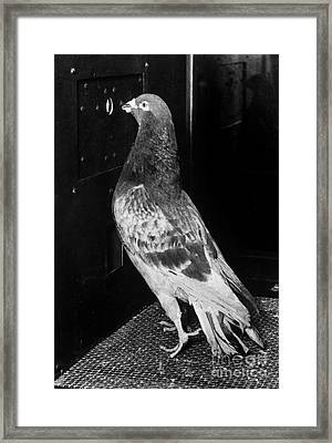 Operant Conditioning Framed Print by Omikron