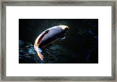 Optical Koi Llusion Framed Print
