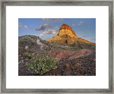 Opuntia Cactus At Cerro Castellan Framed Print by Tim Fitzharris