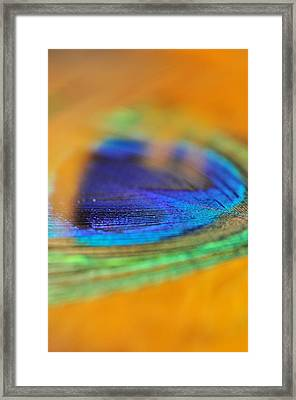 Orange And Blue Feather Framed Print