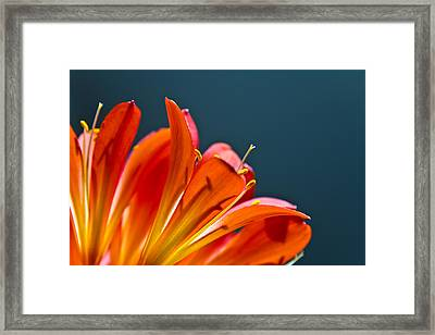 Orange And Blue Framed Print by Justin Albrecht
