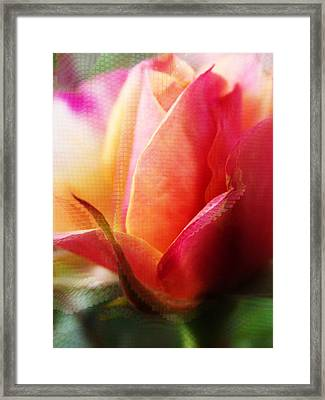 Orange And Pink Rose Abstract Framed Print by Robin Cox
