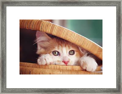 Orange And White Kitten In Basket Framed Print by Sarahwolfephotography