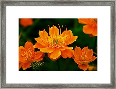 Orange And Yellow Framed Print by Eric Tressler