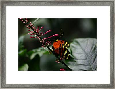 Orange And Yellow On Pink Flowers Framed Print