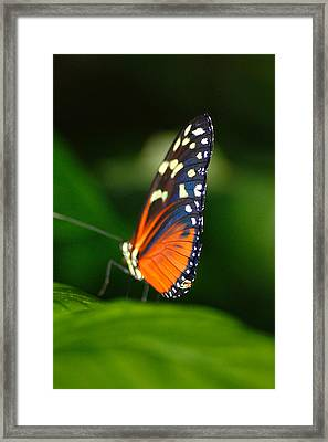 Orange And Yellow Profile Framed Print