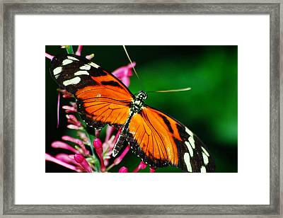 Orange And Yellow With Wings Spread Framed Print