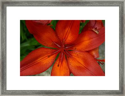 Orange Beauty Framed Print by Dolores  Deal