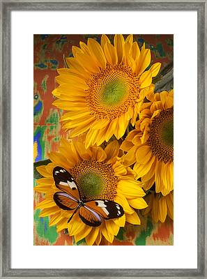Orange Black Butterfly And Sunflowers Framed Print by Garry Gay