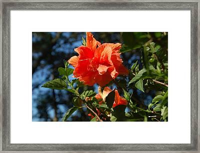 Orange Blossom Framed Print by Aimee L Maher Photography and Art Visit ALMGallerydotcom