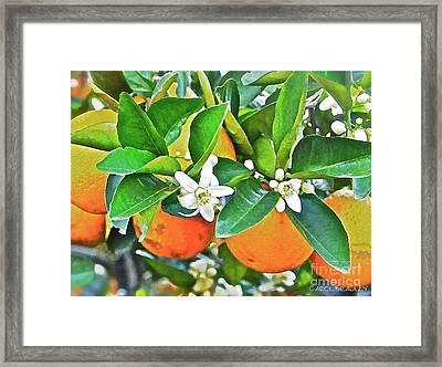 Orange Blossom Special Framed Print by Carol  Bradley