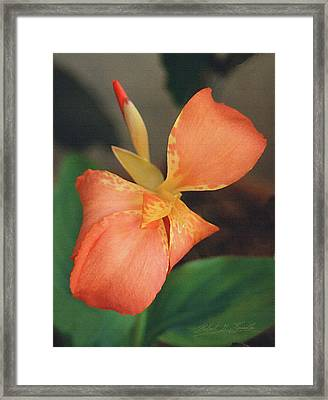 Orange Bud And Petals Framed Print