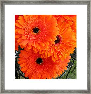 Orange Burst Framed Print by Elvira Butler